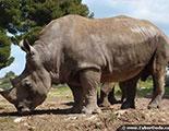 CyberDodo and Rhinos (1-28)