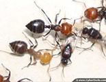Quiz on Ants (1-1)